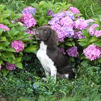 Happydog øst - hundepension og salg af kvalitets hundefoder og kattefoder